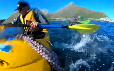 Seal slaps kayaker off South Island town of Kaikoura on September 25, 2018. (Screen capture/YouTube)