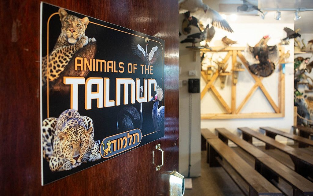 A sign touting 'Animals of the Talmud' at Torah Animal Museum in New York City. (Micah B. Rubin/ Times of Israel)