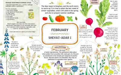 A page from 'A Year in the Garden' calendar by Ilana Stein, a Bezalel Academy trained illustrator and graphic designer who puts her love for home agriculture on the page. (Courtesy, A Year in the Garden)