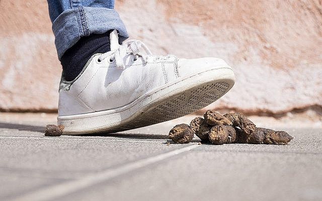 Illustrative image of dog poop  (C_FOR; iStock by Getty Images)