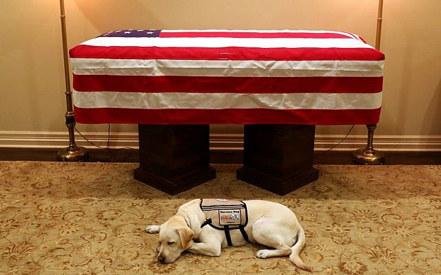 Sully, US president George H.W. Bush's service dog, lies in front of his casket in Houston, December 2, 2018. (Evan Sisley/Office George H.W. Bush via AP)