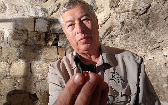 Dr. Tzvika Tzuk, Israel Nature and Parks Authority's director of the department of archaeology, holds a tiny bronze bull. (Melanie Lidman/Times of Israel)