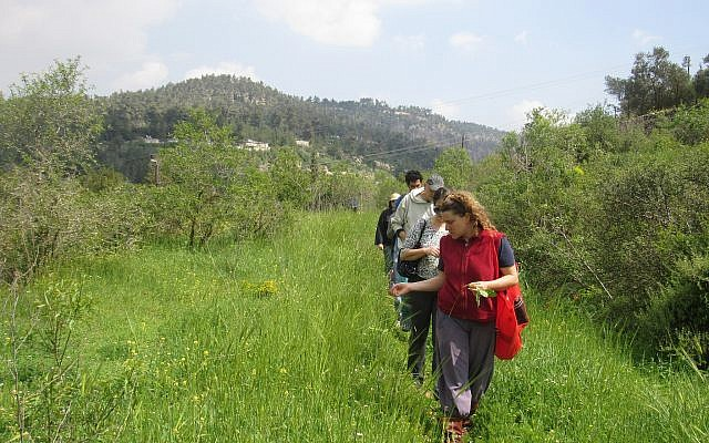 Ilana Stein (in front), foraging in the fields by their Ein Kerem home (Courtesy Ilana Stein)