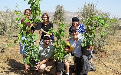 Planting fruit trees in Israel
