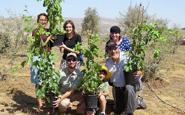 Planting fruit trees in Israel