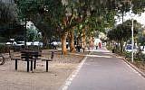 Several species of trees line Ben Gurion Boulevard. (Shmuel Bar-Am)