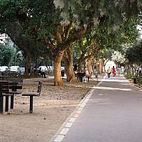 Several species of trees line Ben Gurion Boulevard. (Shmuel Bar-Am)