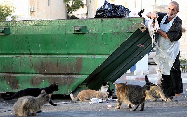 A man feeds stray cats leftovers from his shop, Jerusalem, October 13, 2010 (Keren Freeman/FLASH90)