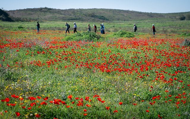Visitors at the Be'eri nature reserve, February 4, 2019. (Luke Tress/Times of Israel)