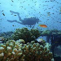 Corals at the Interuniversity Institute for Marine Sciences coral farm in the Red Sea city of Eilat, southern Israel, January 17, 2019. (Interuniversity Institute for Marine Sciences/Dror Komet via AP)
