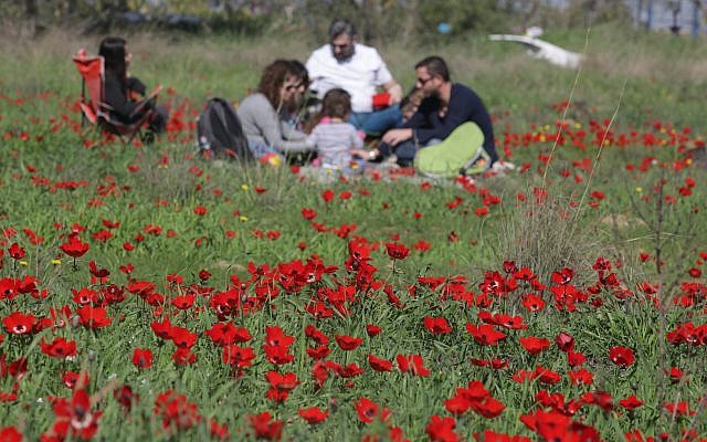 The blooming of Anemones in southern Israel, February 03, 2018 (Nati Shohatl/Flash90)
