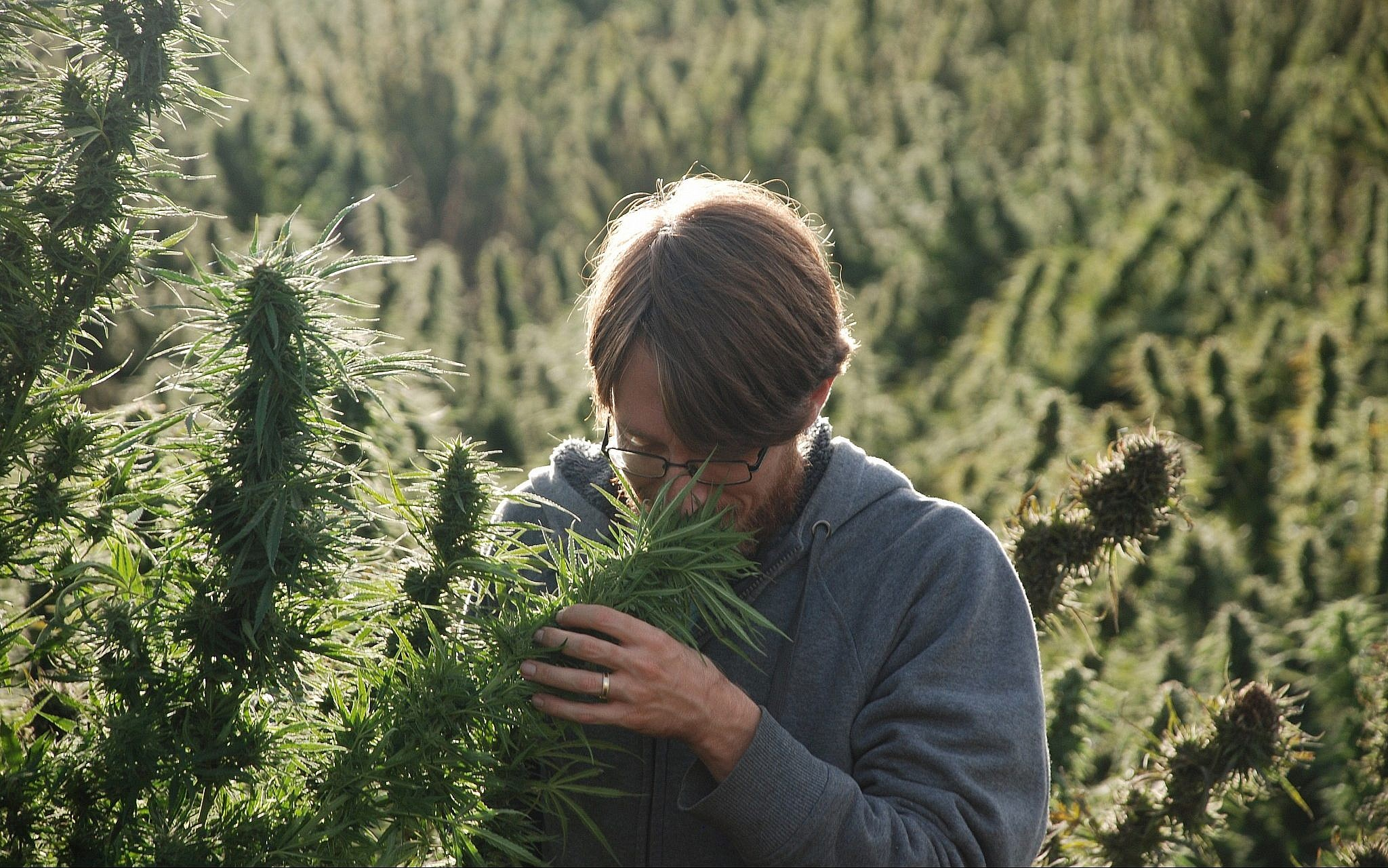 Ziv Genesove smells a cannabis plant in the Rif mountain range. (Courtesy)