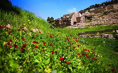 Spring flowers bloom in Jerusalem's Kidron Valley, where the City of David is organizing tours on three consecutive Fridays (Courtesy Eliyahu Yanai)