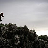 A man rides his horse near Kibbutz Marom Golan in the Golan Heights on January 8, 2019. (Maor Kinsbursky/Flash90)