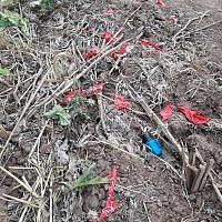 A suspected explosive device connected to a cluster of balloons from the Gaza Strip, which landed in a field in southern Israel on March 24, 2019. (Sha'ar Hanegev Regional Council)
