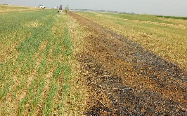 A wheat field in the Eshkol region of southern Israel that was scorched by a fire caused by a balloon-borne incendiary device launched from the Gaza Strip on March 28, 2019. (Eshkol Regional Council)