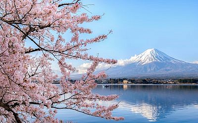 Illustrative image of a cherry blossom tree near mount Fuji in Japan (Phattana; iStock by Getty Images)