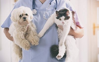Illustrative image of pets with a vet (humonia; iStock by Getty Images)
