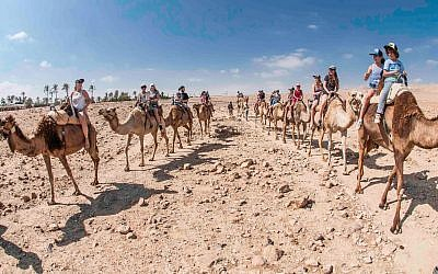Taking a walk on a camel's back in the Judean Desert adjacent to Arad. (Courtesy Kfar Hanokdim)