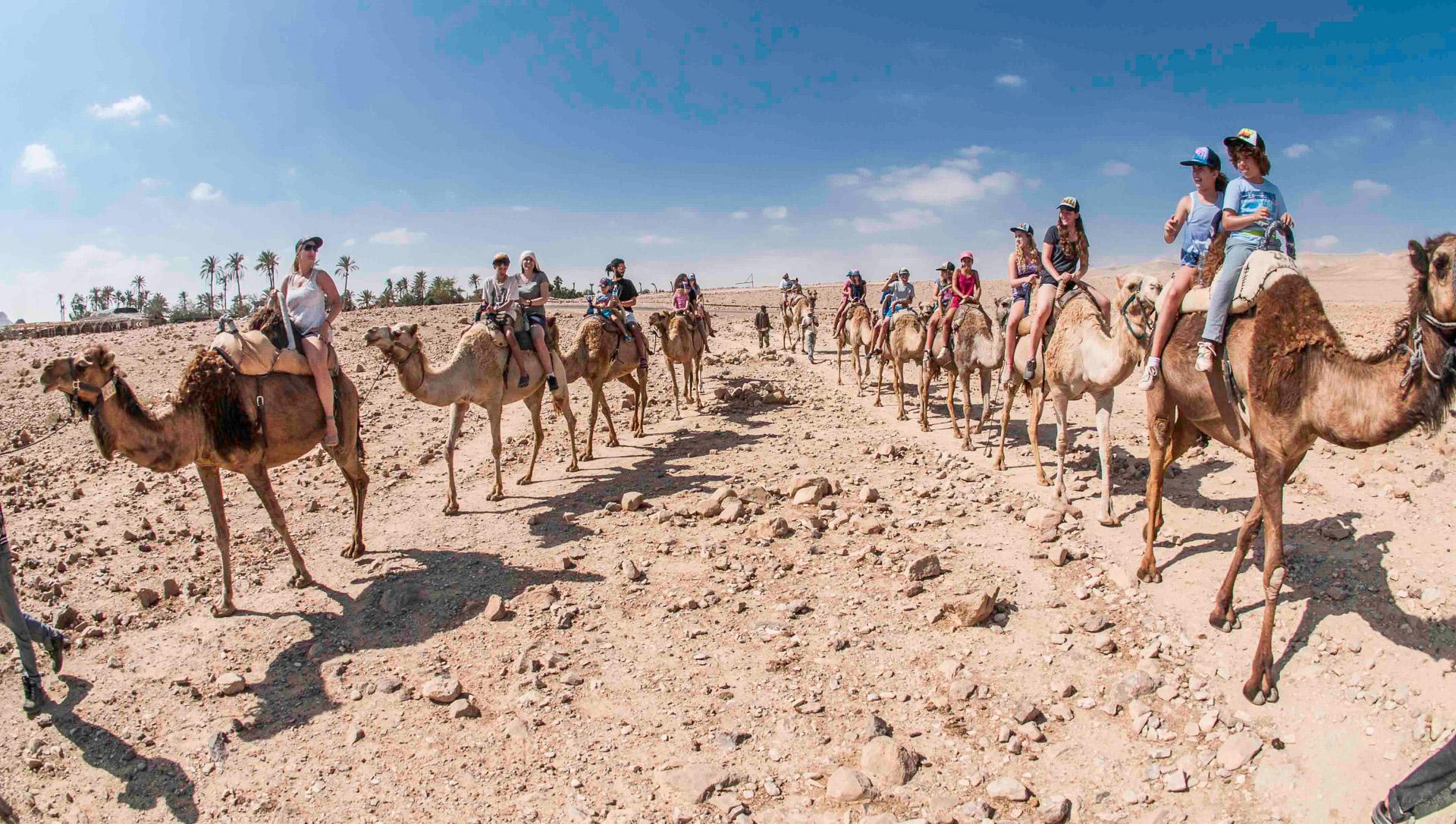Taking a walk on a camel's back in the Judean Desert adjacent to Arad. (Courtesy Kfar Hanokdim)