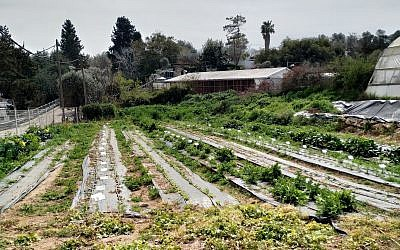 Part of the organic farm at Hadassah Meir-Shfeyah youth village. (Times of Israel)