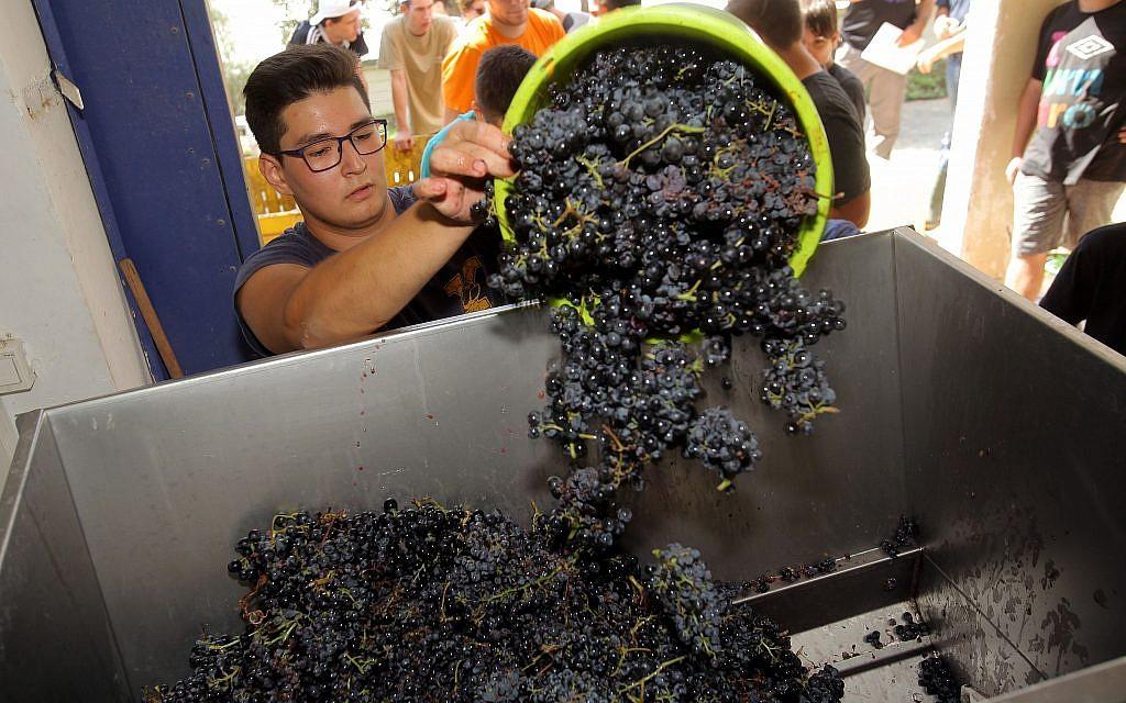 Students work in the winery at the Hadassah-Meir Shfeyah youth village. (Courtesy Hadassah/David Silverman)