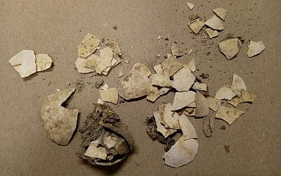 Remnants of 2,600-year-old chicken eggs discovered in the City of David by Dr. Eilat Mazar. (Bar-Ilan University)