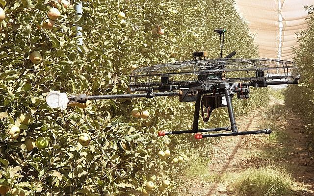 Tevel Aerobotics Technologies has developed a drone that it hopes will help farmers do labor-intensive fruit-picking (Courtesy)
