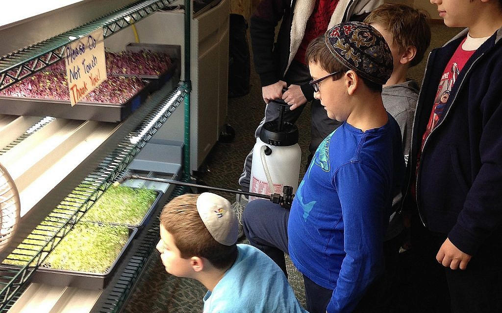 Hillel Academy of Greater Dayton, Ohio students water microgreen crops. (Hillel Academy)