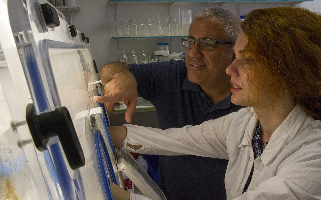 Dr. Ronen Hazan, left, testing a sample in the labs of the Hadassah Medical Center and Hebrew University of Jerusalem School of Dental Medicine. (Yaniv Berman/ Courtesy of the Israel Antiquities Authority)