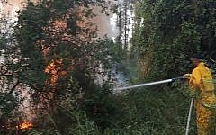A firefighter works to extinguish a blaze in a forest near the northern town of Mishmar Ha'emek on May 25, 2019. (Israel Fire Services)