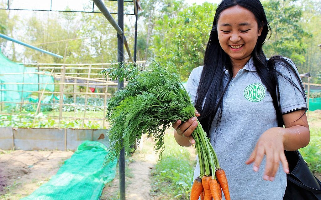 Ake Eco Farm and Sustainable Development Learning Center student Sut Ngai Ja harvests organic carrots. (Emily Fishbein/Times of Israel)