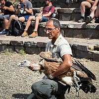 A vulture that fell ill after being poisoned is returned to the wild in Gamla, in the Golan Heights, May 16, 2019. (Basel Awidat/Flash90)