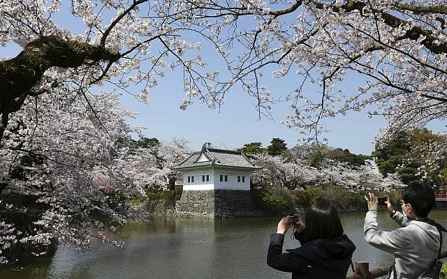 A couple takes photos around Odawara Castle, southwest of Tokyo, Japan, during the blooming of the cherry blossoms, March 31, 2018. (AP Photo/Koji Sasahara)