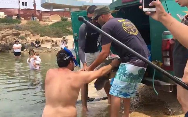 Members of Israel's Sea Turtle Rescue Center release an injured, pregnant turtle on May 26, 2019, after it was rescued on May 23, while in distress far from shore. (Channel 11 screen capture)