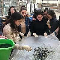 Students at Herzliya Hebrew Gymnasium high school in Tel Aviv producing spirulina. (Courtesy - JustSpirulina.org )