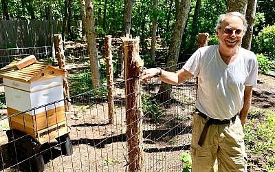 Marty Markowitz showing off his apiary in the backyard of his Southampton home. (Debra Nussbaum Cohen via JTA)