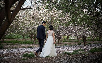 An Israeli couple photographed for their wedding at a blossoming almond tree field in Latrun on February 25, 2019. (Hadas Parush/Flash90)