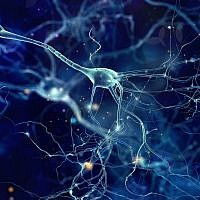 An illustrative image of neurons, or brain cells (whitehoune; iStock by Getty Images)