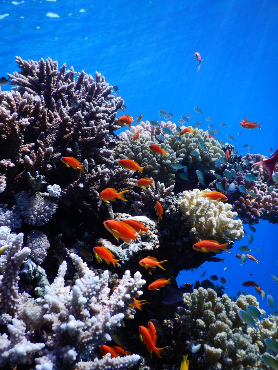 40a6ce8feab42 The Red Sea Transnational Research Center will study thousands of types of  fish and coral found