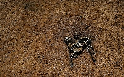 In this March 8, 2017 file photo, the carcass of a dead goat lies in the desert in a drought-stricken area near Bandar Beyla in Somalia. (AP Photo/Ben Curtis)