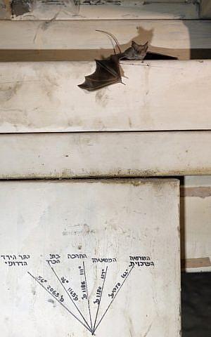 Bats hang where Israeli soldiers once stood in Jordan Valley