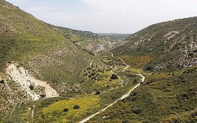 Shrubland in Nahal Dishon