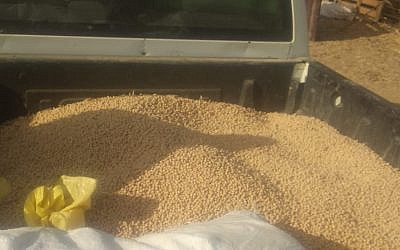 A vehicle loaded with about half a ton of stolen chickpeas, near Kibbutz Nahal Oz on July 21, 2019. (Israel Police)