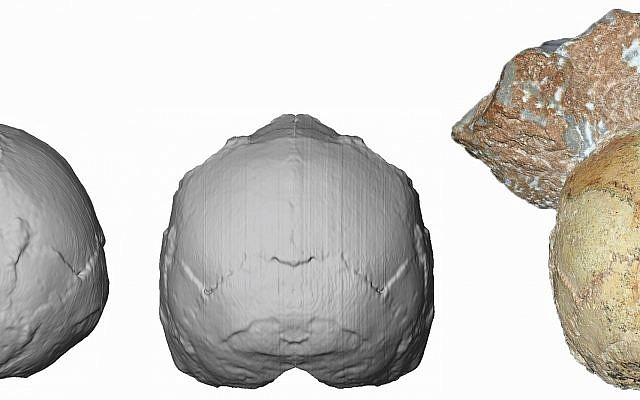 This image provided by the University of Tuebingen in Germany shows the Apidima 1 partial cranium fossil, right, with a piece of rock still attached, and its digital reconstruction from a posterior view, middle, and a side view, left. The rounded shape of the Apidima 1 cranium is a unique feature of modern humans and contrasts sharply with Neanderthals and their ancestors. (Katerina Harvati/University of Tuebingen via AP)