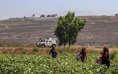 Farmers work in the plain of Marjayoun on the outskirts of the southern Lebanese village of Khiam, opposite the Israeli town of Metula, along the border with Israel, on August 26, 2019. (Mahmoud ZAYYAT / AFP)
