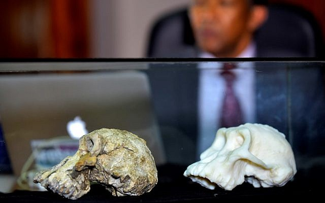 Skull find of humans' oldest-known ancestor may alter