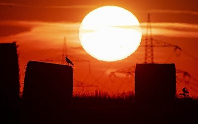 In this file photo dated July 25, 2019, a bird sits on a straw bale on a field in Frankfurt, Germany, as the sun rises during a heatwave in Europe. (AP Photo/Michael Probst)