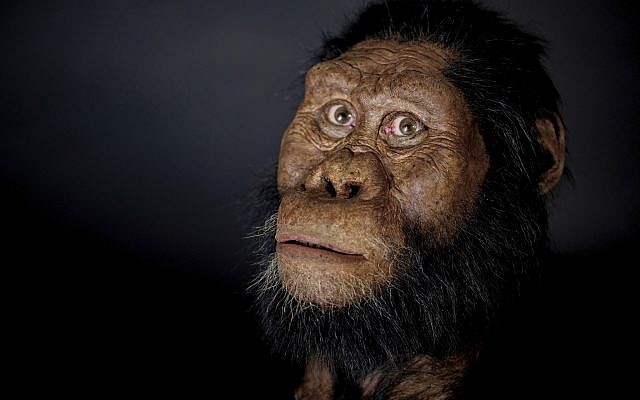 A facial reconstruction model by John Gurche made from a fossilized cranium of Australopithecus anamensis. (Matt Crow/Cleveland Museum of Natural History via AP)