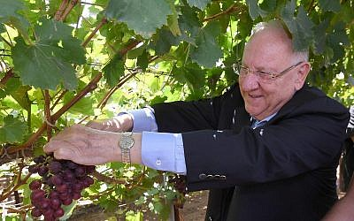 "President Reuven Rivlin inspects a newly-developed variety of grapes named ""Rivlin"" in honor of his late wife Nechama, at the Agriculture Ministry's Agricultural Research Organization facility in Beit Dagan, August 15, 2019. (Mark Neiman/GPO)"